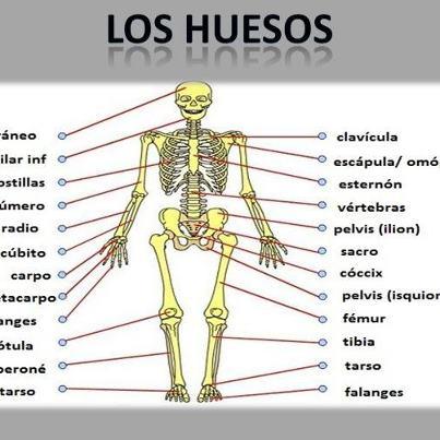 Mueve el esqueleto
